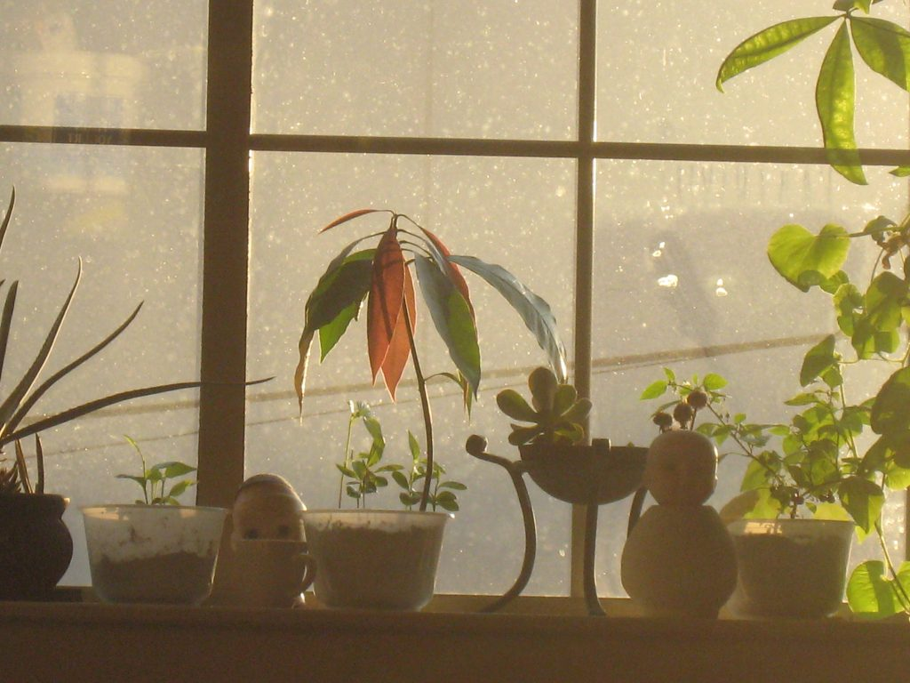 earwig window garden photo_contact page image